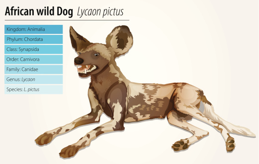 African Wild Dog Clip Art, Vector Images & Illustrations.