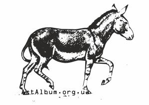 wild donkey.