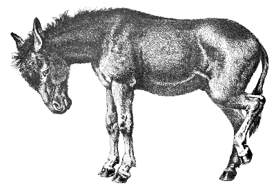 Free Donkey Clipart, 1 page of Public Domain Clip Art.