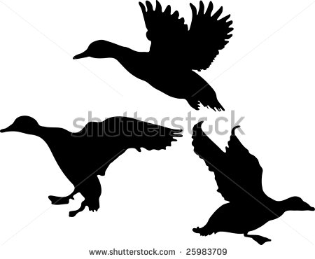 Free flying mallard duck clipart.