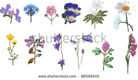 Illustration Wild Flowers Collection Isolated On Stock Vector.