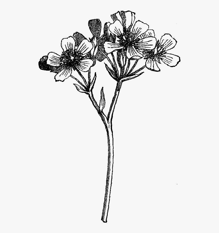 Digital Wildflower Downloads.