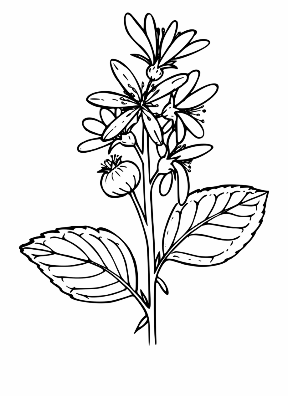 Flower Plant Wild Wildflower Clipart Png Image.