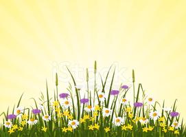 Wild Flower Meadow stock vectors.
