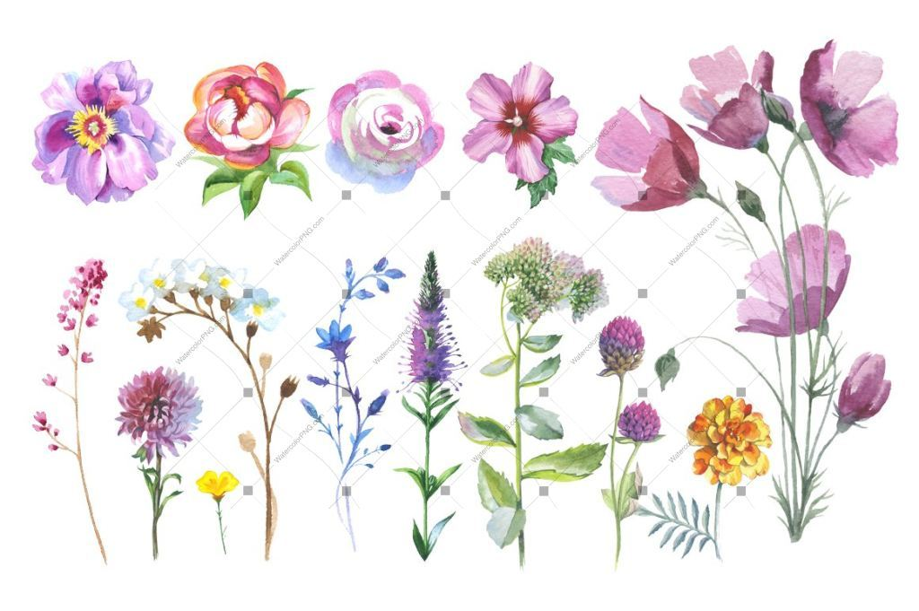 Wild Flowers watercolor PNG clipart.
