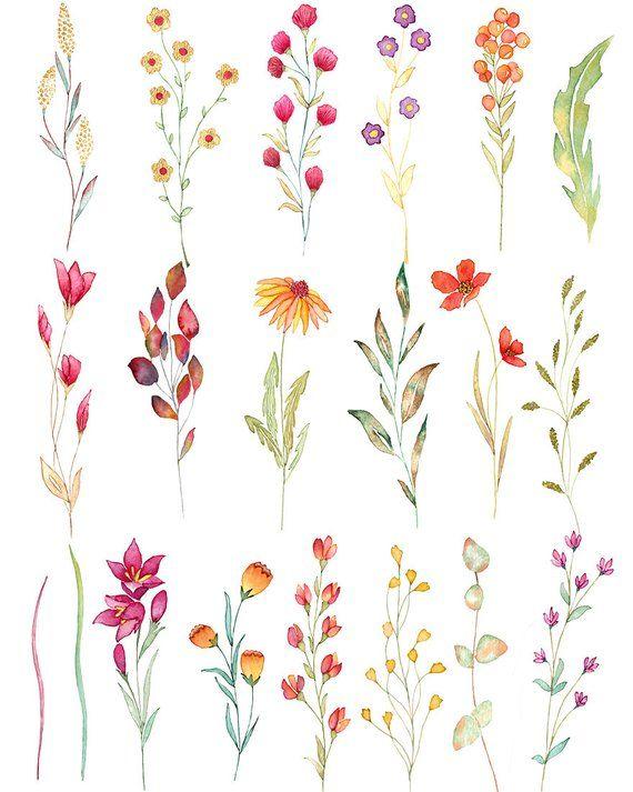 Wild flower watercolor clipart, aquarel wild flowers, floral.