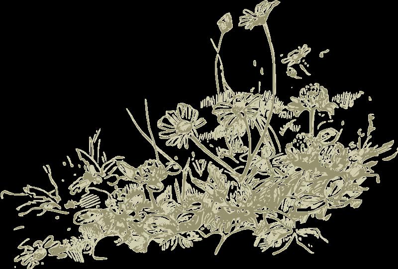 Wildflower Clipart.