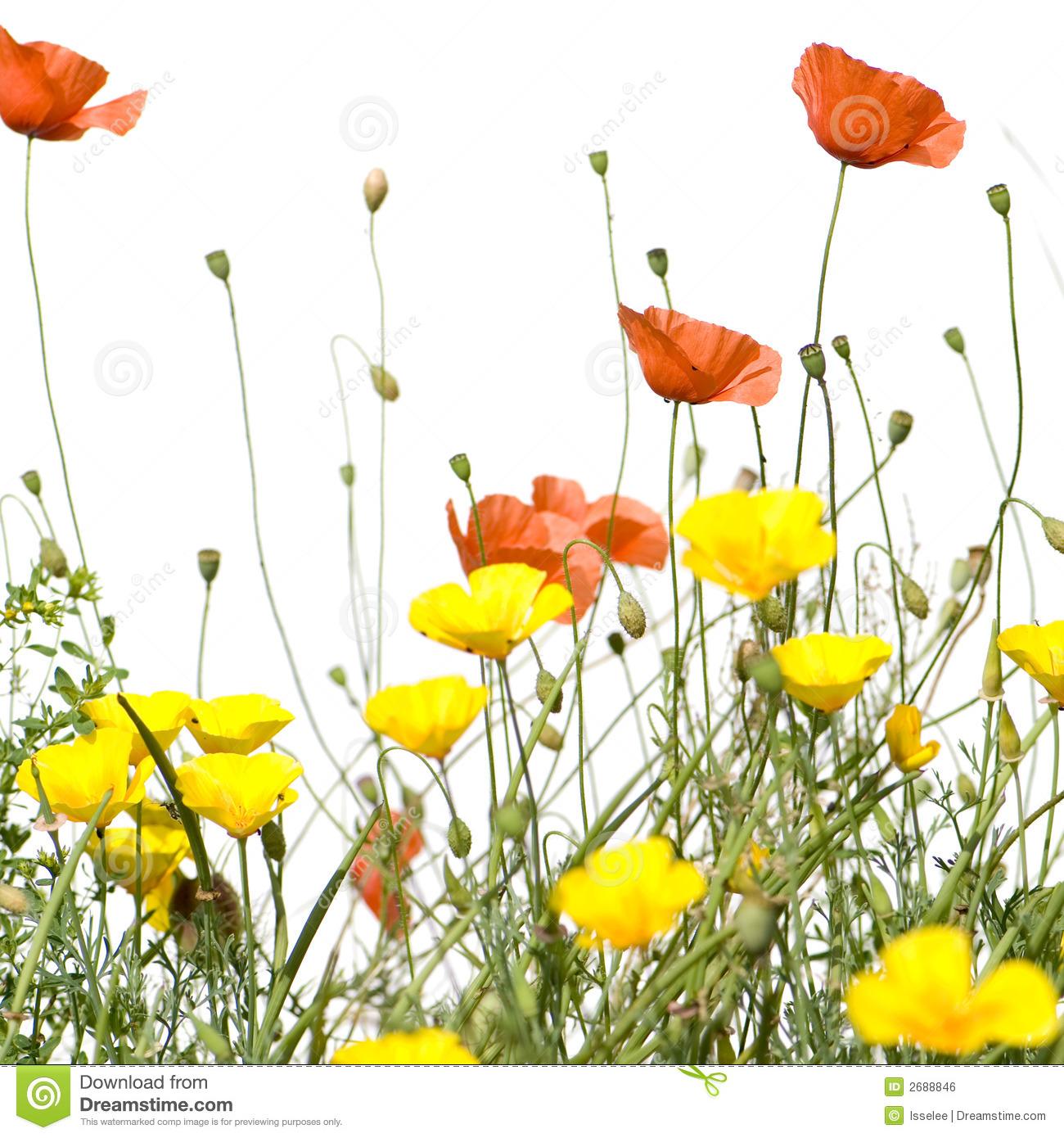 Wild flowers clip art.