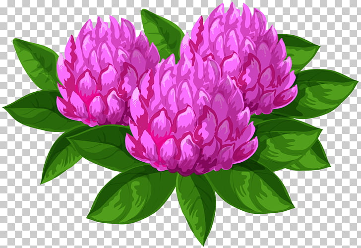 Flower , Wild Flowers PNG clipart.
