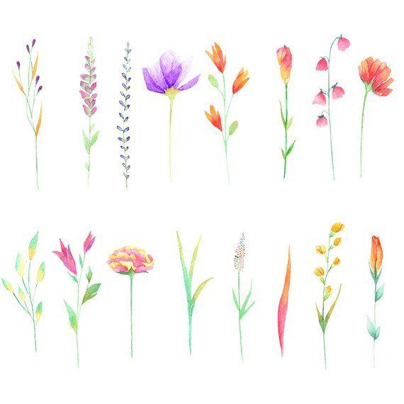 Wild flower clipart, field flowers, boho wedding, boho.