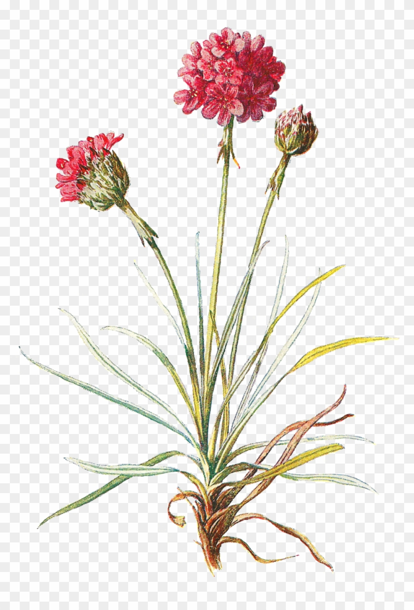 Wild Flowers Png.