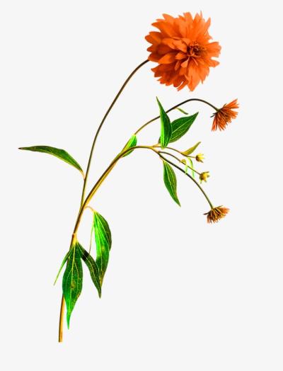 Wildflowers PNG.
