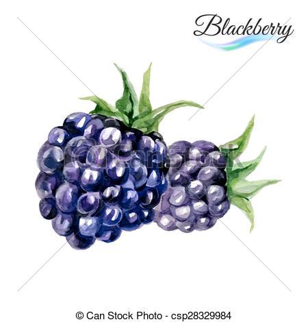 Wild fruit clipart #18