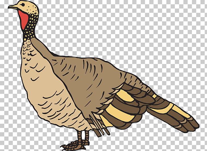 Black turkey Turkey meat , Wild Game s PNG clipart.