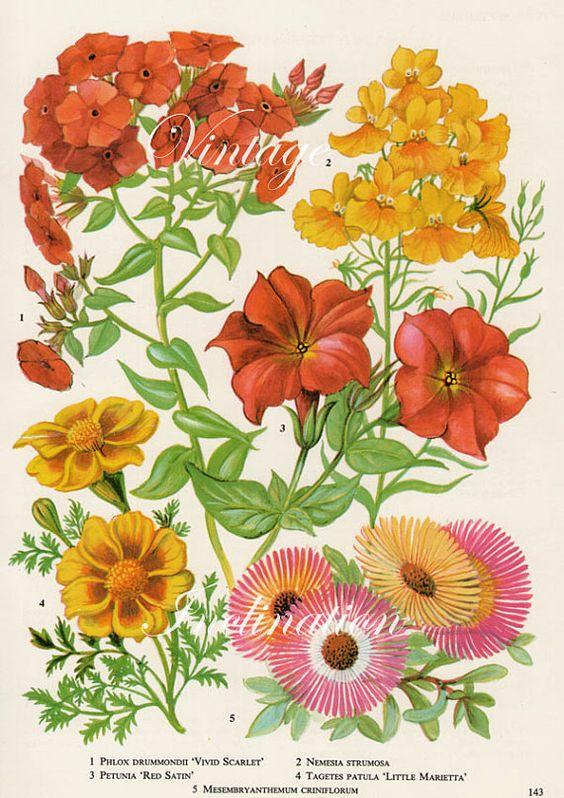 Wild garden plant clipart #10