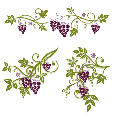 Grape Vine Border Vine grapes border vector.