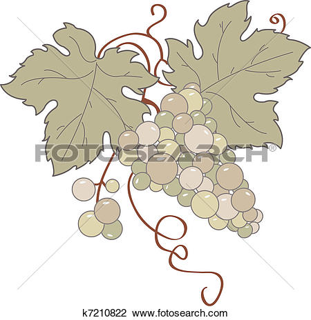 Clipart of Wild Grapes k7210822.
