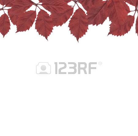 107 Wild Grape Vine Cliparts, Stock Vector And Royalty Free Wild.