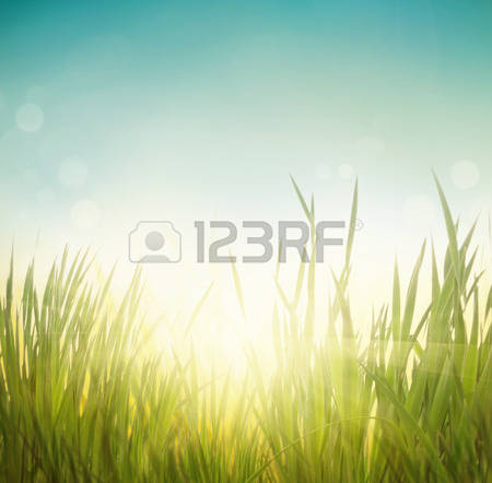 236,072 Grass Stock Vector Illustration And Royalty Free Grass Clipart.