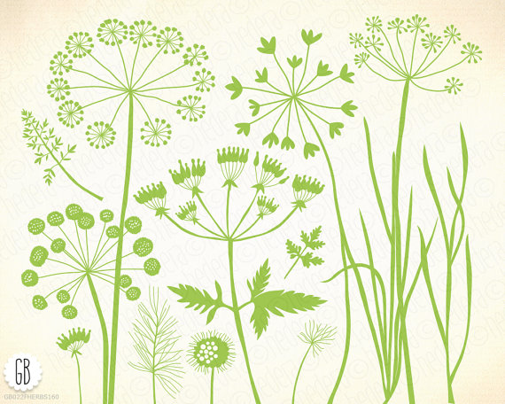 Wild herbs, wildflowers, plants, flora, silhouette, vector clip.