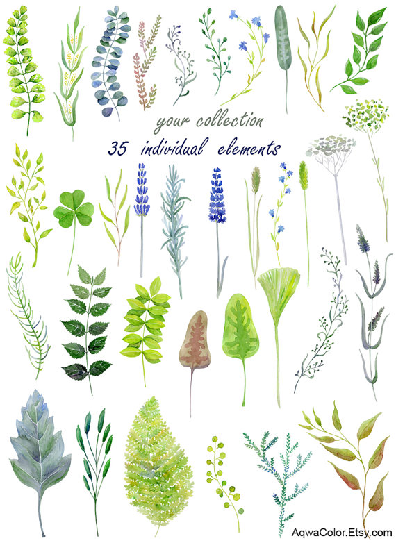 Watercolor clipart Wild Herbs commercial use clipart by AqwaColor.