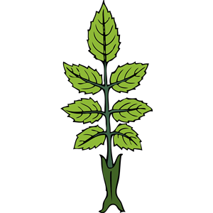 wild rose branch clipart, cliparts of wild rose branch free.