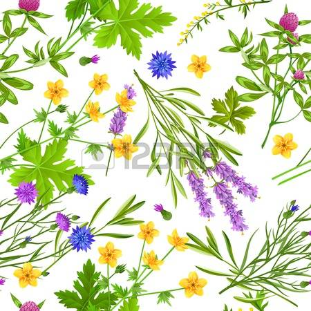 6,522 Medical Herbs Stock Vector Illustration And Royalty Free.
