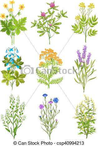 Vector Clip Art of Collection Of Wild Herbs.