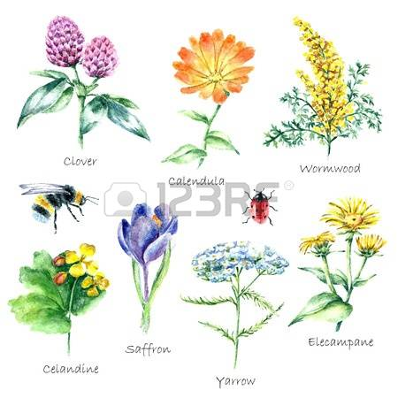 5,299 Wild Herbs Cliparts, Stock Vector And Royalty Free Wild.