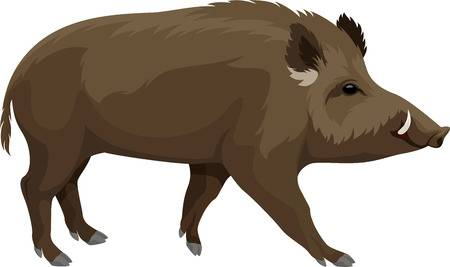 7,408 Wild Boar Stock Vector Illustration And Royalty Free Wild Boar.