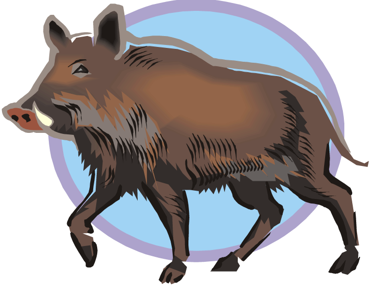 Hog clipart common animal, Hog common animal Transparent.