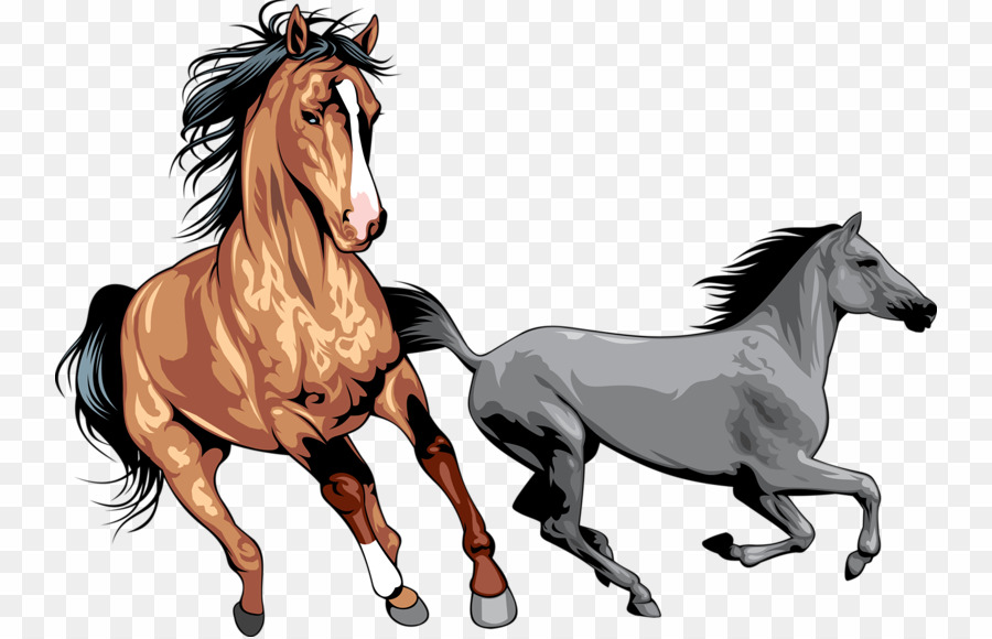 Wild Horses PNG Wild Horse Mustang Clipart download.
