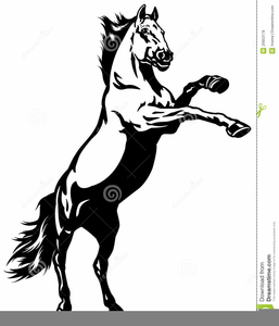 Mustang Wild Horse Clipart.