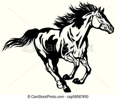 pinto wild mustang horse.
