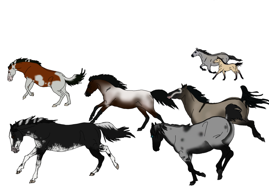 Horse Drawings.