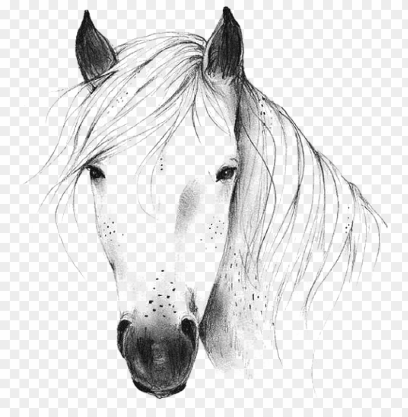 wild horse head clipart 10 free Cliparts | Download images ...