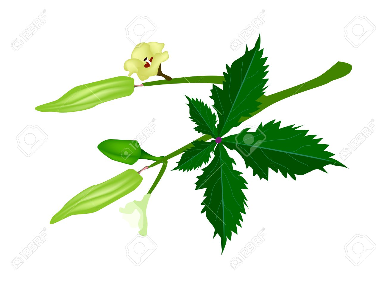 Okra Blossom Images & Stock Pictures. Royalty Free Okra Blossom.
