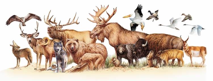 Wildlife Clip Art Free.