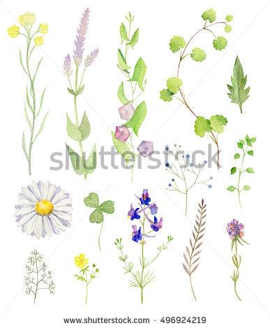 Cliparts Herbs Stock Photos, Royalty.