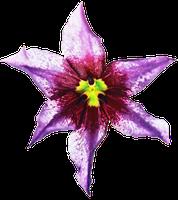 DeviantArt: More Like Wild Lilac Tropical Flower by jeanicebartzen27.