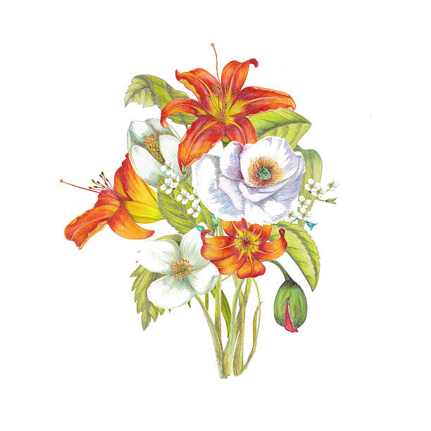 Drawing Of Wild Orange Lilies Clip Art, Vector Images.