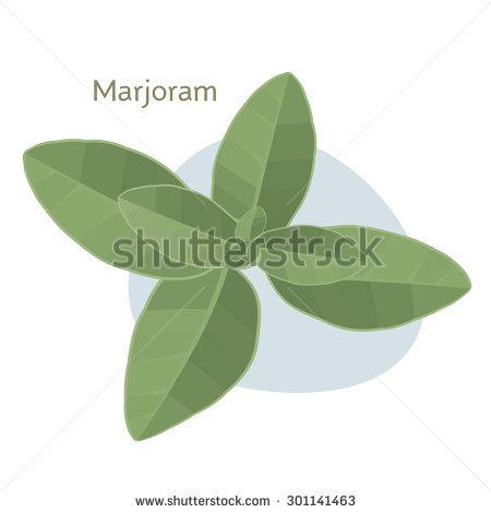 Wild Marjoram Stock Vectors & Vector Clip Art.