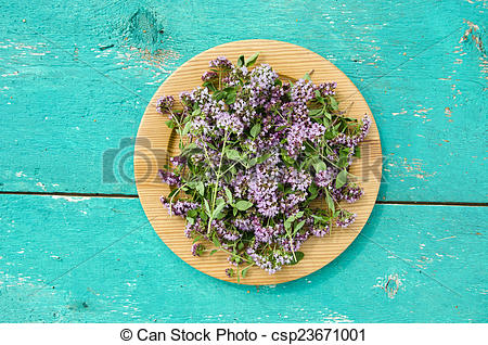 Stock Photography of wild marjoram oregano medical flowers in.
