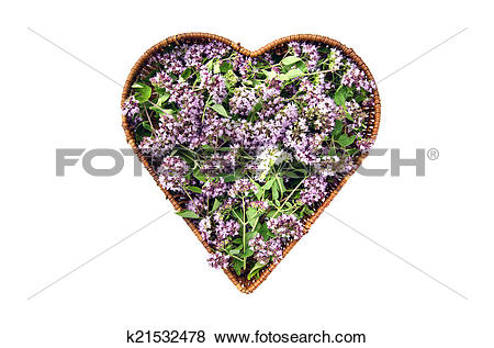 Pictures of wild marjoram oregano medical and spices flowers in.