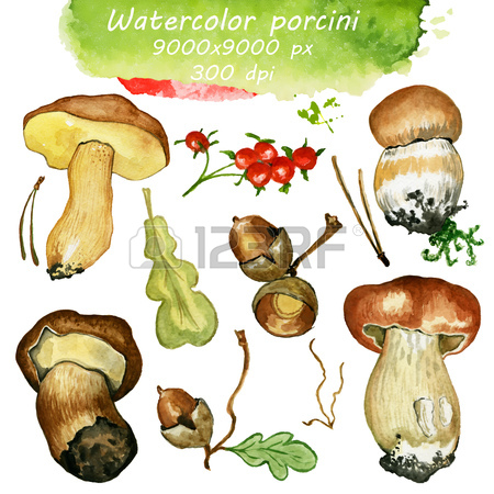 Wild Mushrooms. Hand Drawn Watercolor Painting Isolated Over.