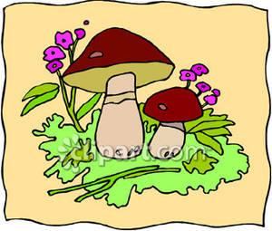 Mushrooms and Purple Flowers.