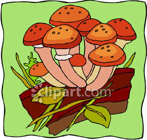 Spotted_Orange_Wild_Mushrooms_Royalty_Free_Clipart_Picture_081221.