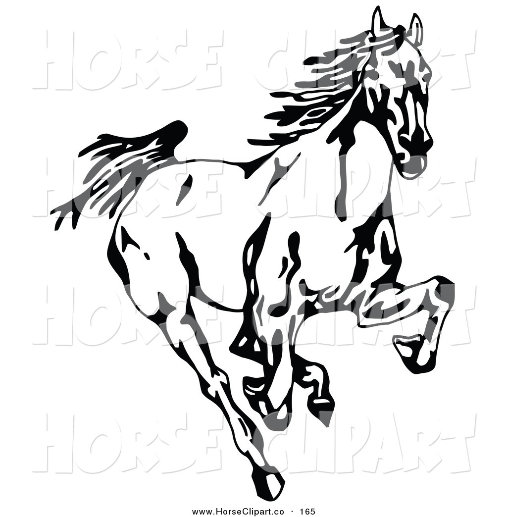 Clip Art of a Black and White Wild Mustang Running Forward Towards.