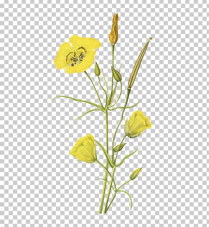 Floral Design Wild Flowers Of America Printing PNG, Clipart.