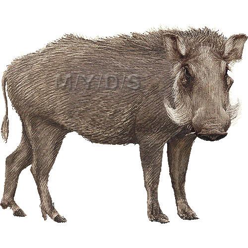 Wild Boar Clipart.
